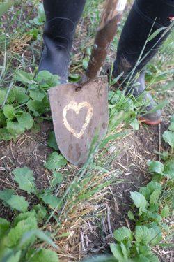 heart-shovel-no-filter