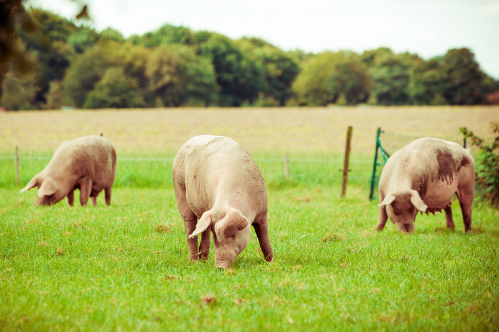 What Are the Rules for Organic Livestock?