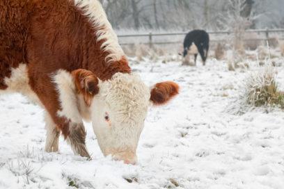 Do Animals Wear Winter Coats?