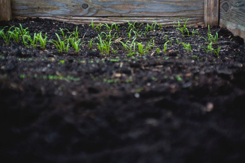 maintaining nitrogen rich soil in organic farming